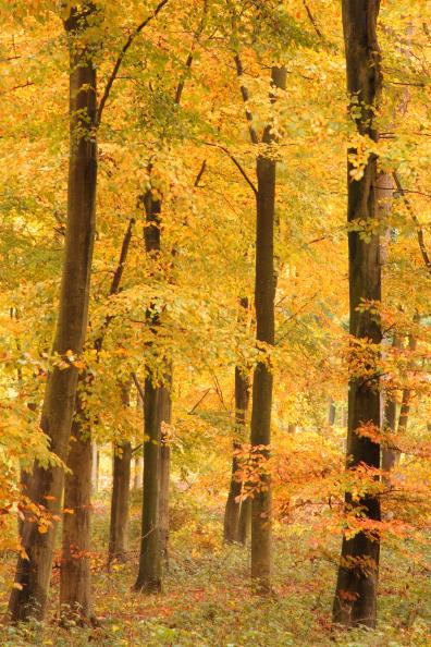 Autumnal forest image