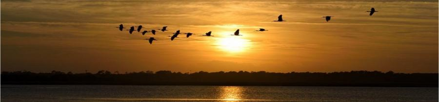 Birds flying over seascape at sunset